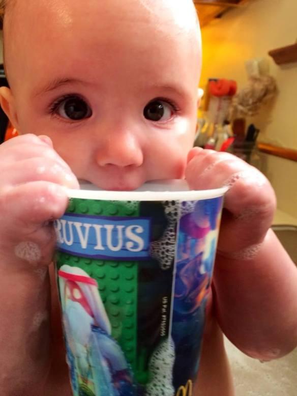 Scarlett cup
