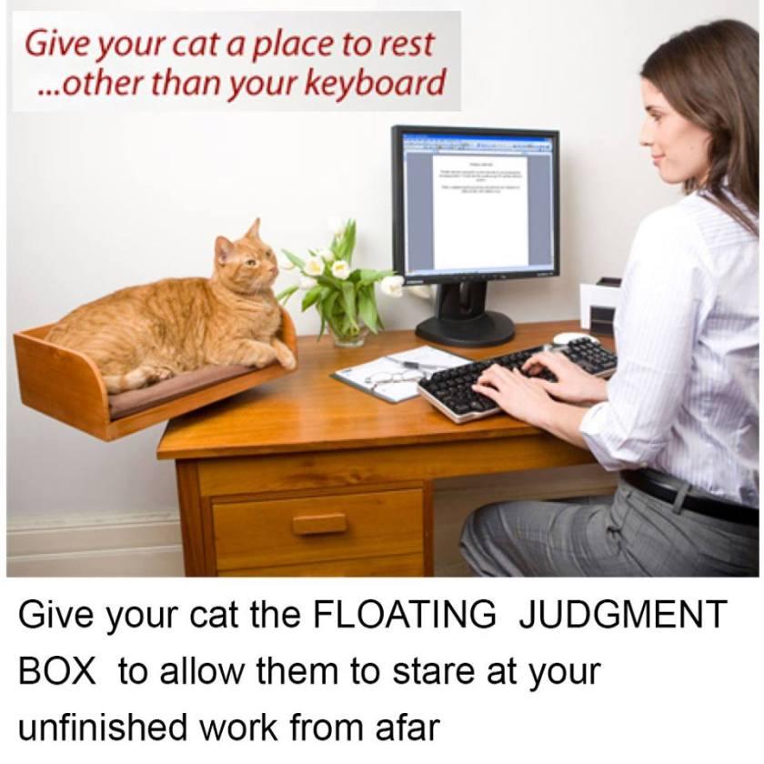 Cat Judgement Box